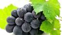 En Güçlü Antioksidan: Üzüm!
