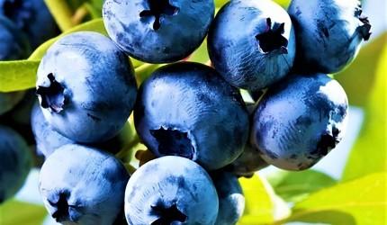 Yiyebileceğiniz en sağlıklı 7 kırmızı orman meyvesi