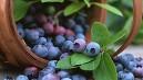 Bu besinler unutkanlığı önlüyor